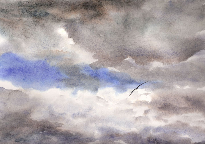 Watercolor Painting of Skua, Antarctica